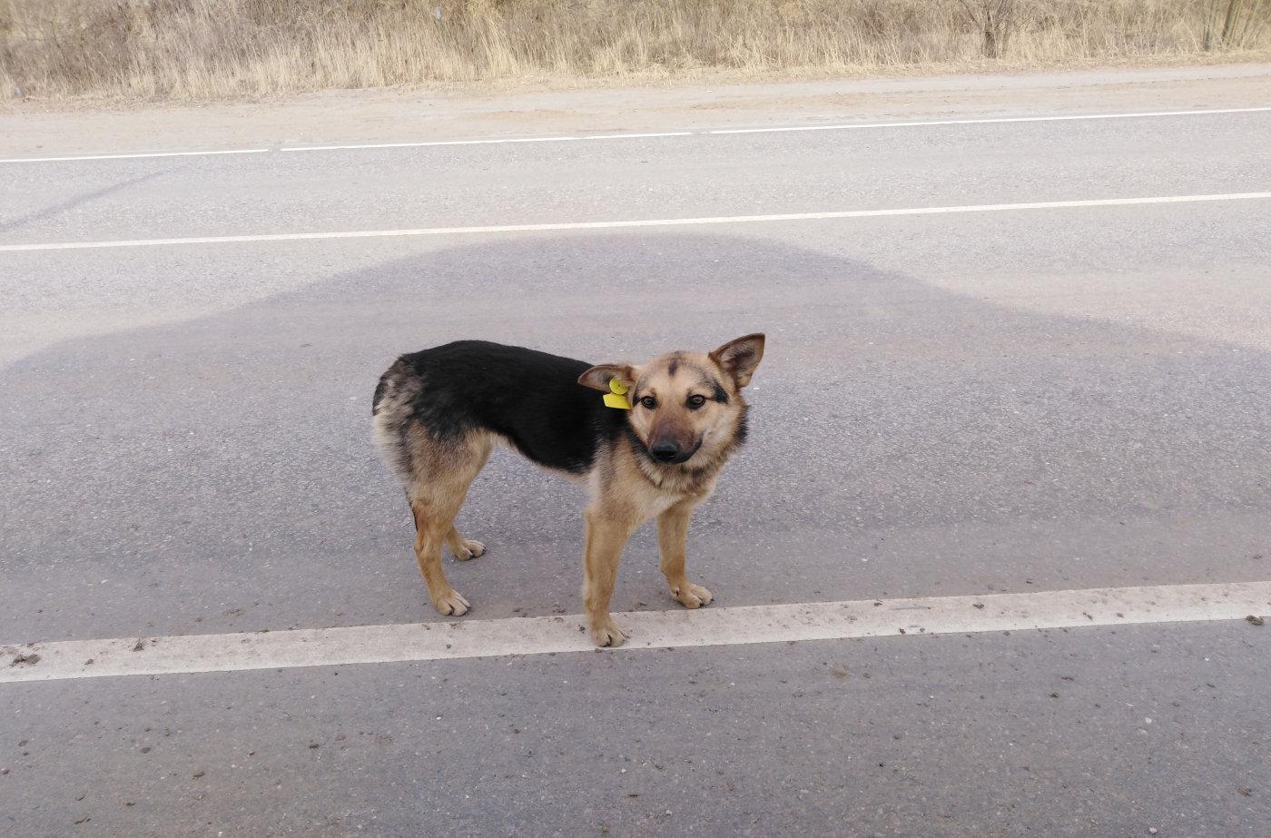 собака с меткой